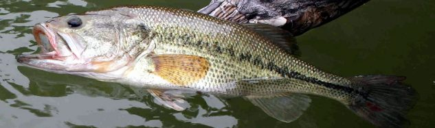 Better Half Tour - Catch and Release Bass Tournaments